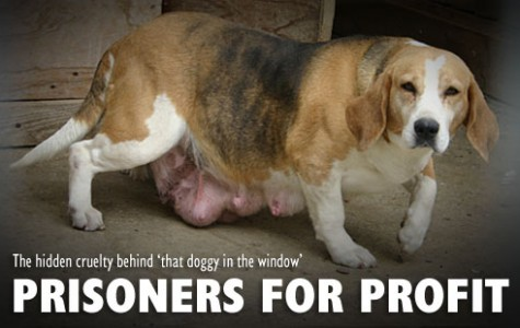The horrors of dog breeding